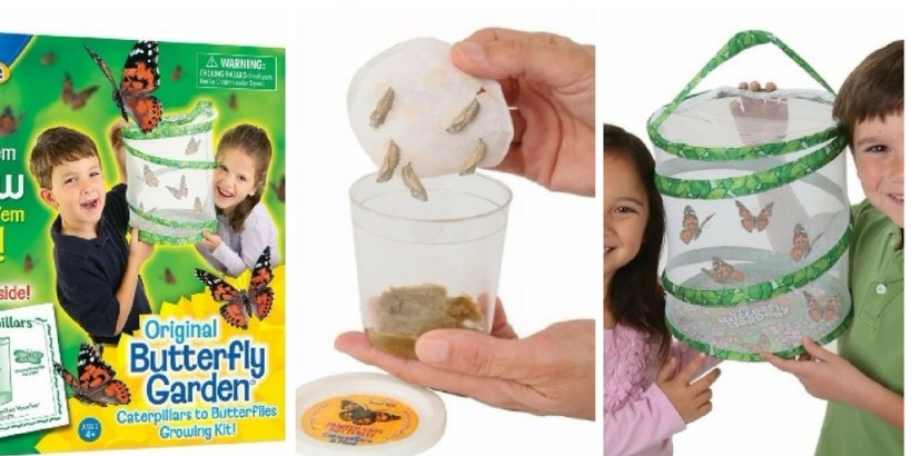 Butterfly Garden For Kids:One of the best science kits for kindergarten kids.
