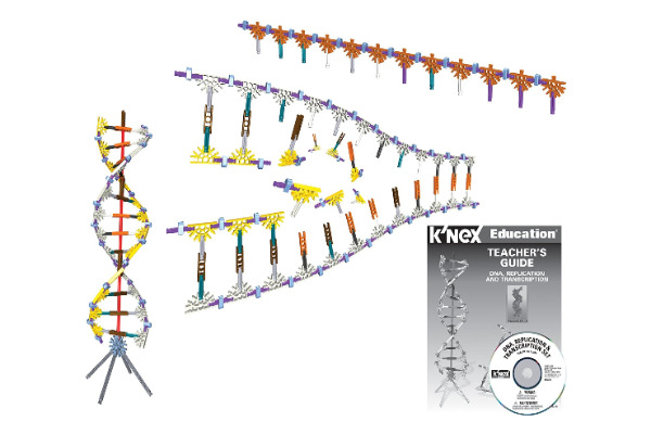 K'nex DNA Replication And Transcription set - genetics at a very basic level. 10 year olds should understand this no problem