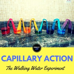 Capillary Action Experiment – Paper Towel Version: The Case Of The Traveling Water