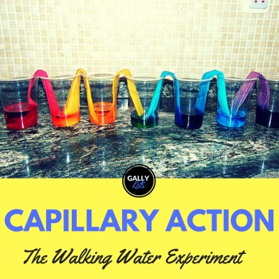 Teach capillary action to kids using this running water experiment with paper towels. You can use white flowers toos.