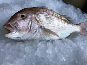 comprar pescados a domicilio