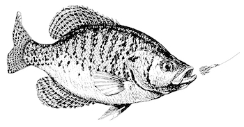 February Slabfest: Best Bets for Early Oklahoma Crappie