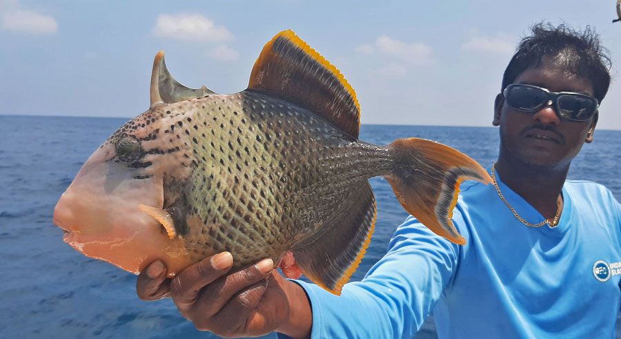 No2_Titan-triggerfish_fishing_jigging_andaman_Shimano-Stella_gamefishingasia_boat_big-fish_gtpopping_boat-charter_angler_Sahadev-Shetty