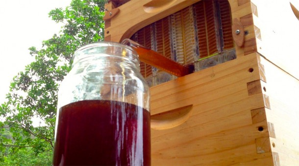 Make Honey From Beehives With Push Of A Button