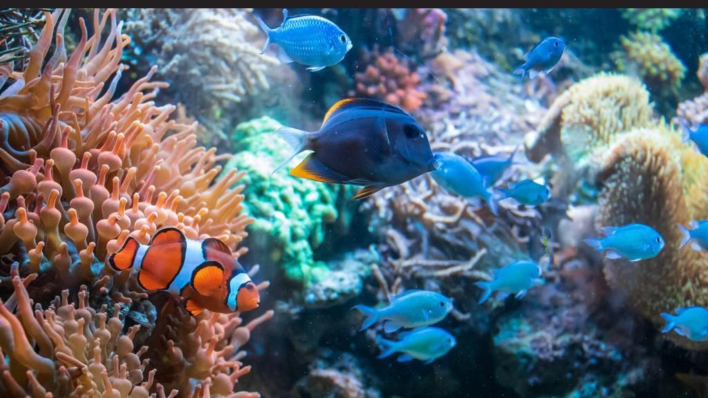 Best Underwater Games for PC