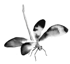 2nd Spirit - Dragonfly - Shimmer