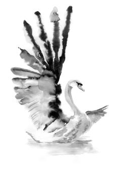 5th Spirit - Swan - Illumination