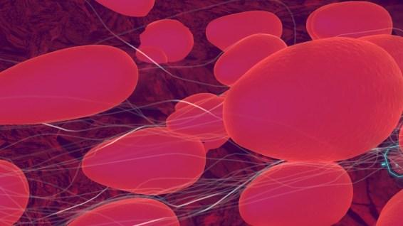 Cette séquence envoûtante commence par un champ de globules rouges...