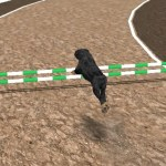 Crazy Real Dog Race