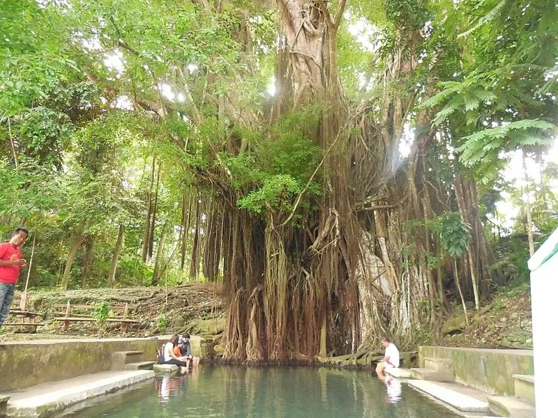Old Enchanted Balete Tree, things to do in Siquijor Island, Siquijor tourist spots