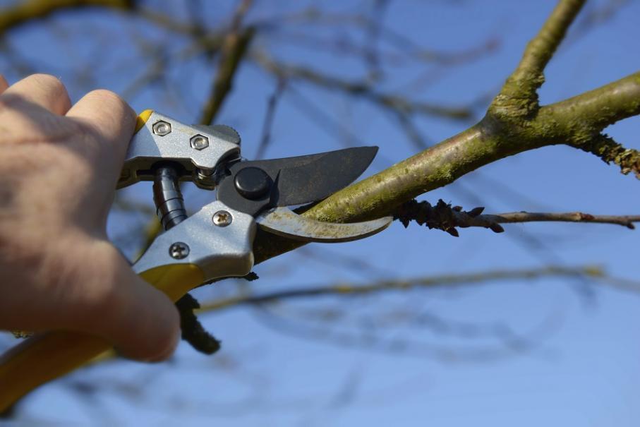 """Résultat de recherche d'images pour """"image citronnier arbre de noël"""""""