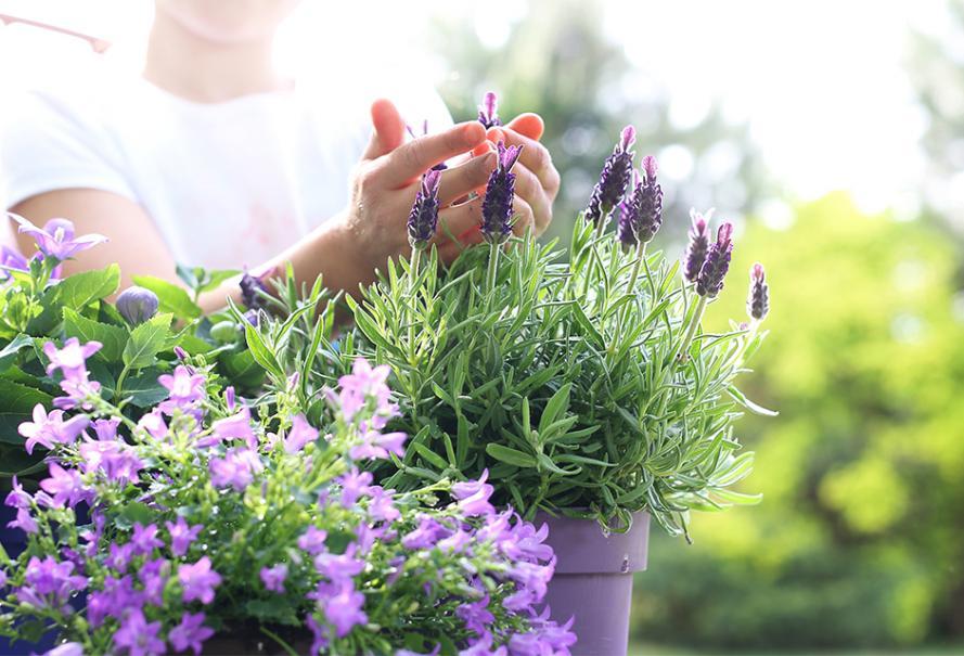 plantes en pot special secheresse