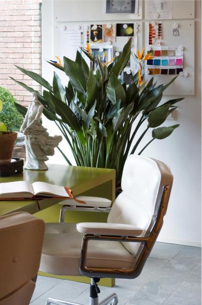 7 plantes vertes pour votre bureau