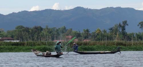 Ils tapent sur l'eau pour diriger les poissons vers les filets.
