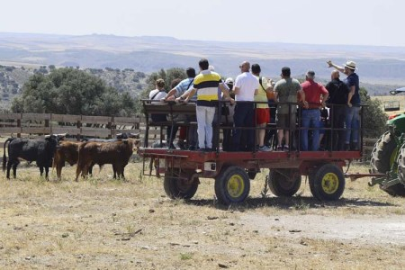 Presenciando a los novillos de cerca - See the bulls safe and confortable