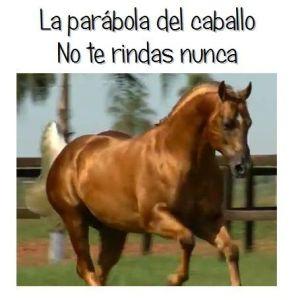 La parábola del caballo. No te rindas nunca