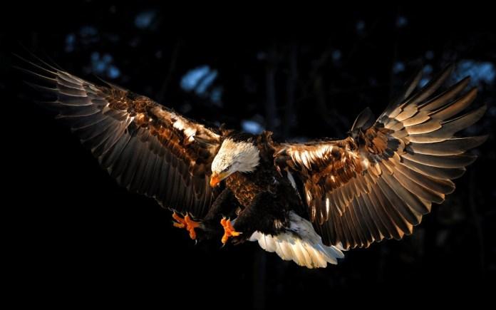 Sore High Like an Eagle