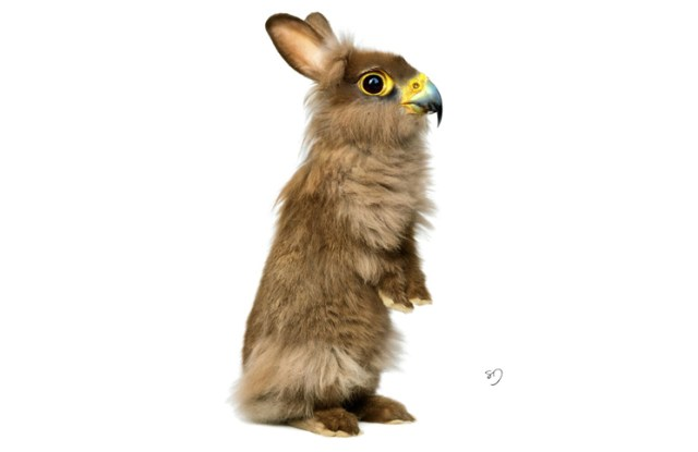 Hawk Rabbit