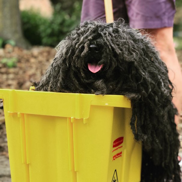 Best Halloween Costume For Dogs