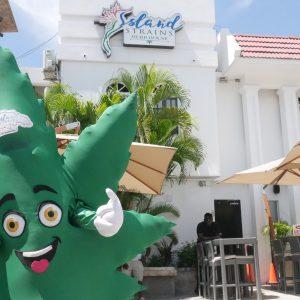 Island Strains Herb House