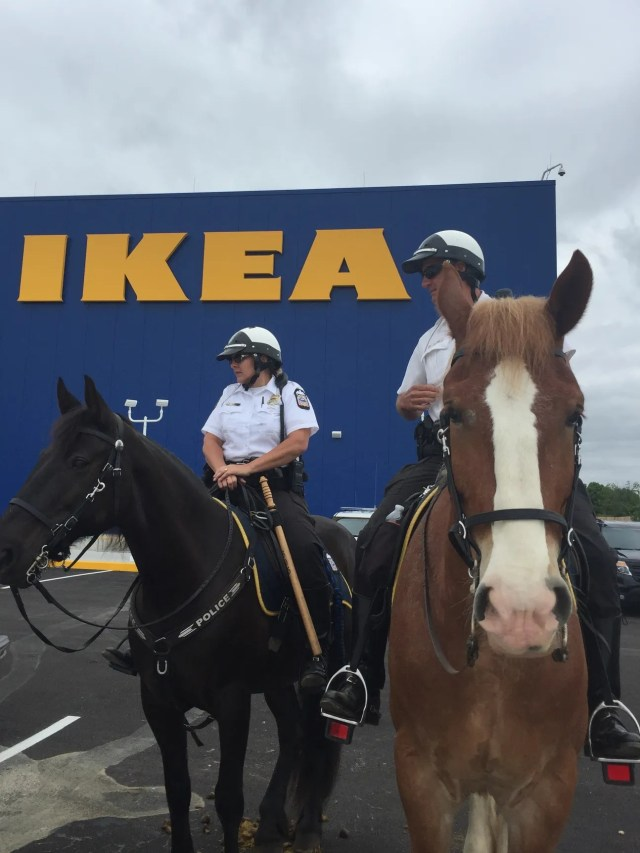 What Its Like To Live Through An Ikea Grand Opening