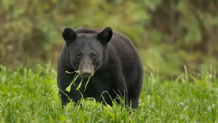 bear attack colorado couple