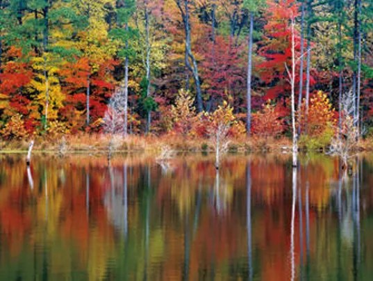 Fall Colors Wallpaper New England Fall Foliage 2017 Here S When The Leaves Will Be At Peak