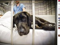 Dog jumps on hospital bed to comfort boy with Autism