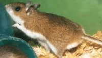 Hantavirus strain claims 25-yr-old male