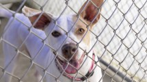 Ingham County Animal Shelter Makes Plea Dog Adoption