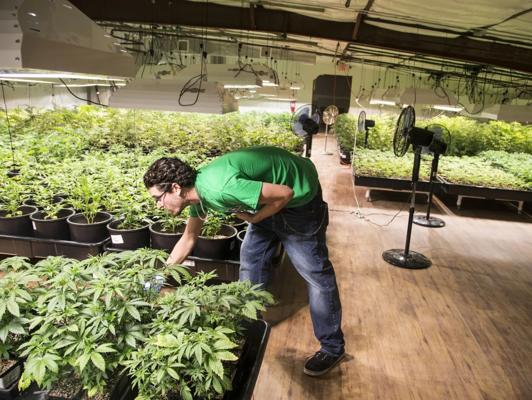 Arizona Supreme Court to rule whether pot patients can be ...