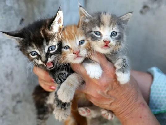 Is It Ok To Give Kitten Cat Food