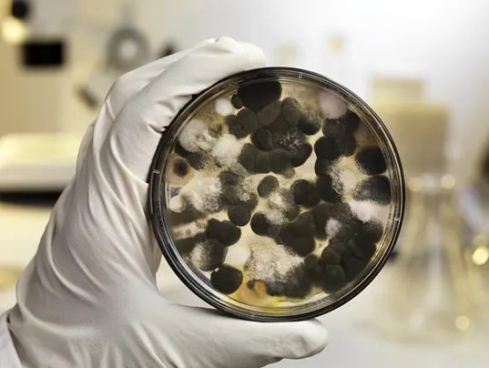 Your homes odor may be making you sick