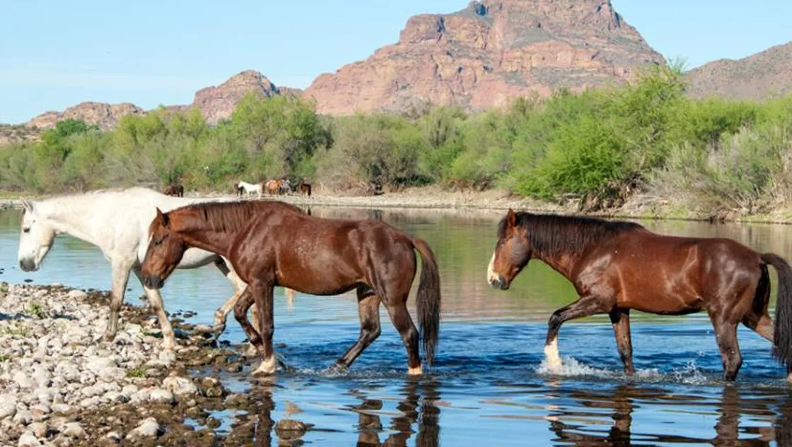 Group fighting to save wild horses on the Salt River