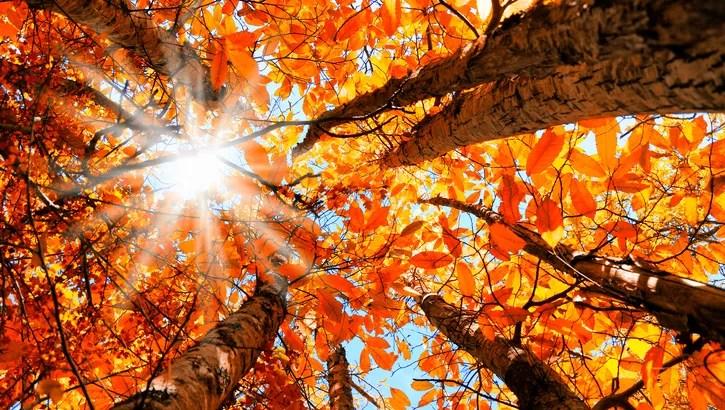 Fall Pumpkin Desktop Wallpaper Free A World Traveler S Guide To Fall Leaf Peeping