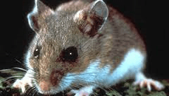 Fourth hantavirus death reported in New Mexico this year
