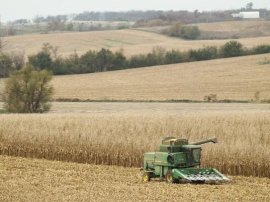 A combine harvests corn on a farm in Wheatland, Iowa,
