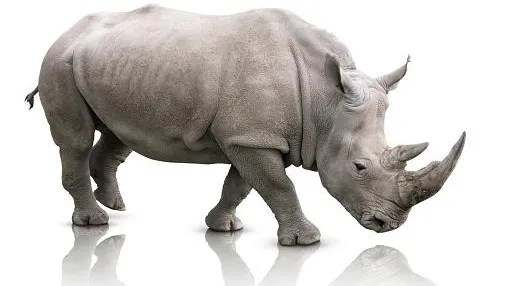 What Is A Conservative Anyway Why The Rino Debate Is