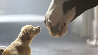 "Anheuser-Busch's 2014 Super Bowl commercial entitled ""Puppy Love."" The ad will run in the fourth quarter of the game."