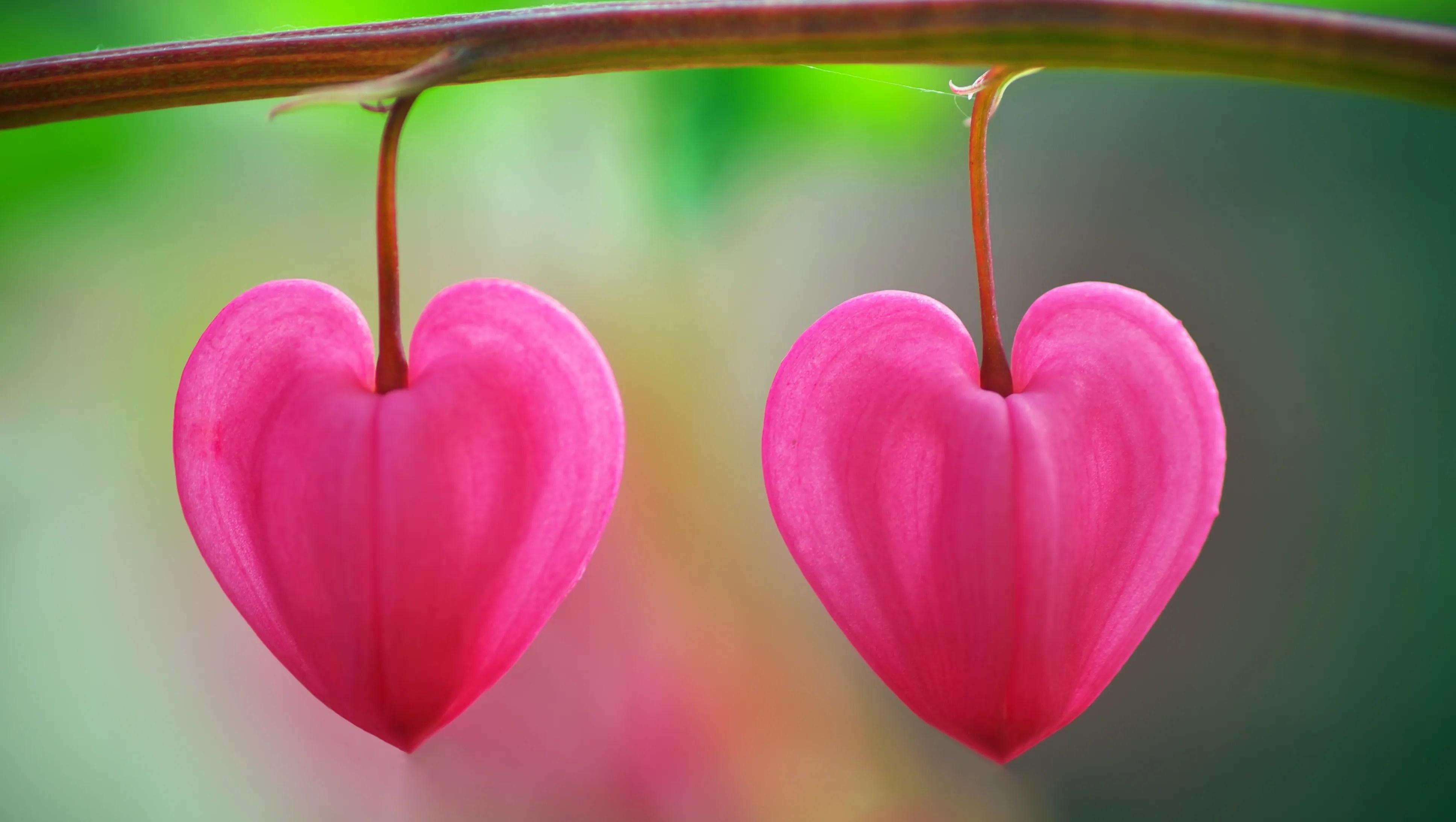 this valentine s day