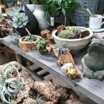 Ridgeland Store Opens Sunroom With Indoor Plants And Home Decor