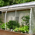 Raised Beds Benefit From Cover Either Plastic Or Natural