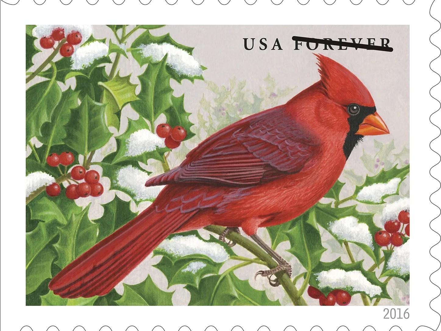 cardinal nc state bird
