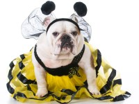 Pet Halloween costumes 2017: These are the most popular