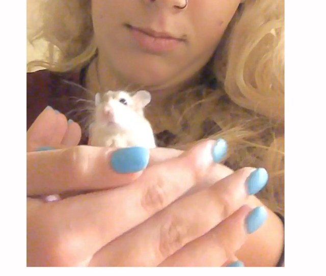 Belen Aldecosea Says A Spirit Airlines Employee Suggested She Flush Her Emotional Support Hamster Named Pebbles Down The Toilet Because She Couldnt Bring