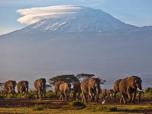 A herd of adult and baby elephants walks in the dawn