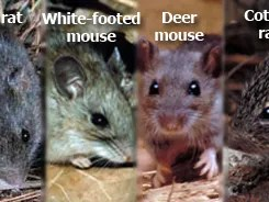 Death from Hantavirus reported in New Mexico