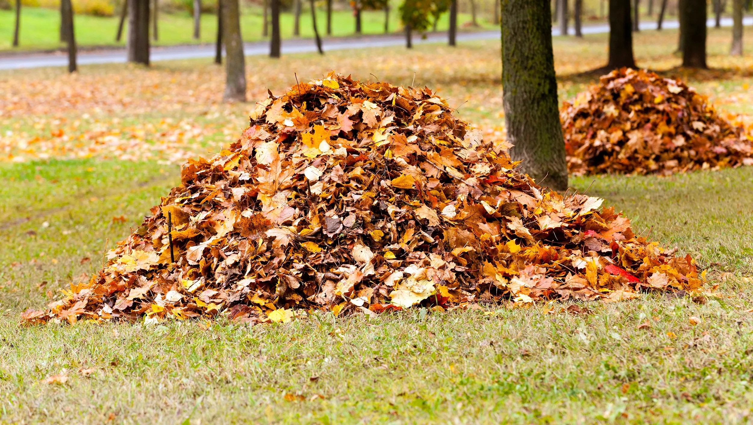Why Do You Rake Leaves