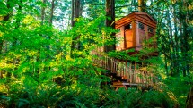 Tired Of Hotels Climb Treehouse