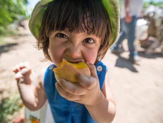 Schnepf Farms Peach Festival